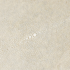 Shagreen and bone